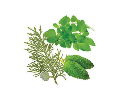 dōTERRA AromaTouch® Massage Blend - 15ml