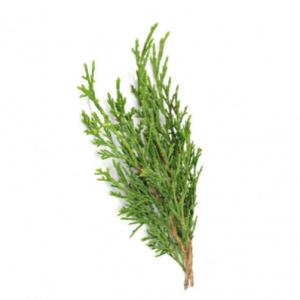 dōTERRA Cypress Essential Oil – 15ml