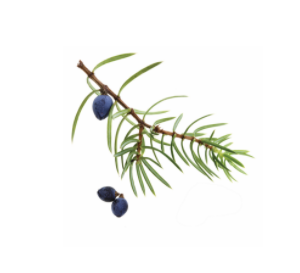 dōTERRA Juniper Berry Essential Oil – 5ml