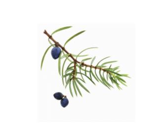dōTERRA Juniper Berry Essential Oil - 5ml