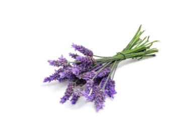 dōTERRA Lavender Touch - 10ml Roll On