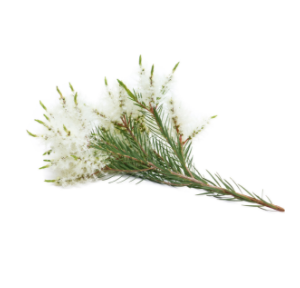 dōTERRA Melaleuca (Tea Tree) Essential Oil – 15ml