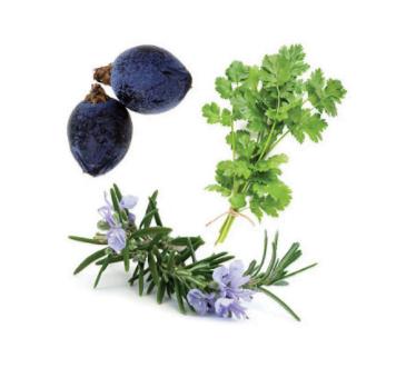 dōTERRA Zendocrine® Detoxification Blend - 15ml